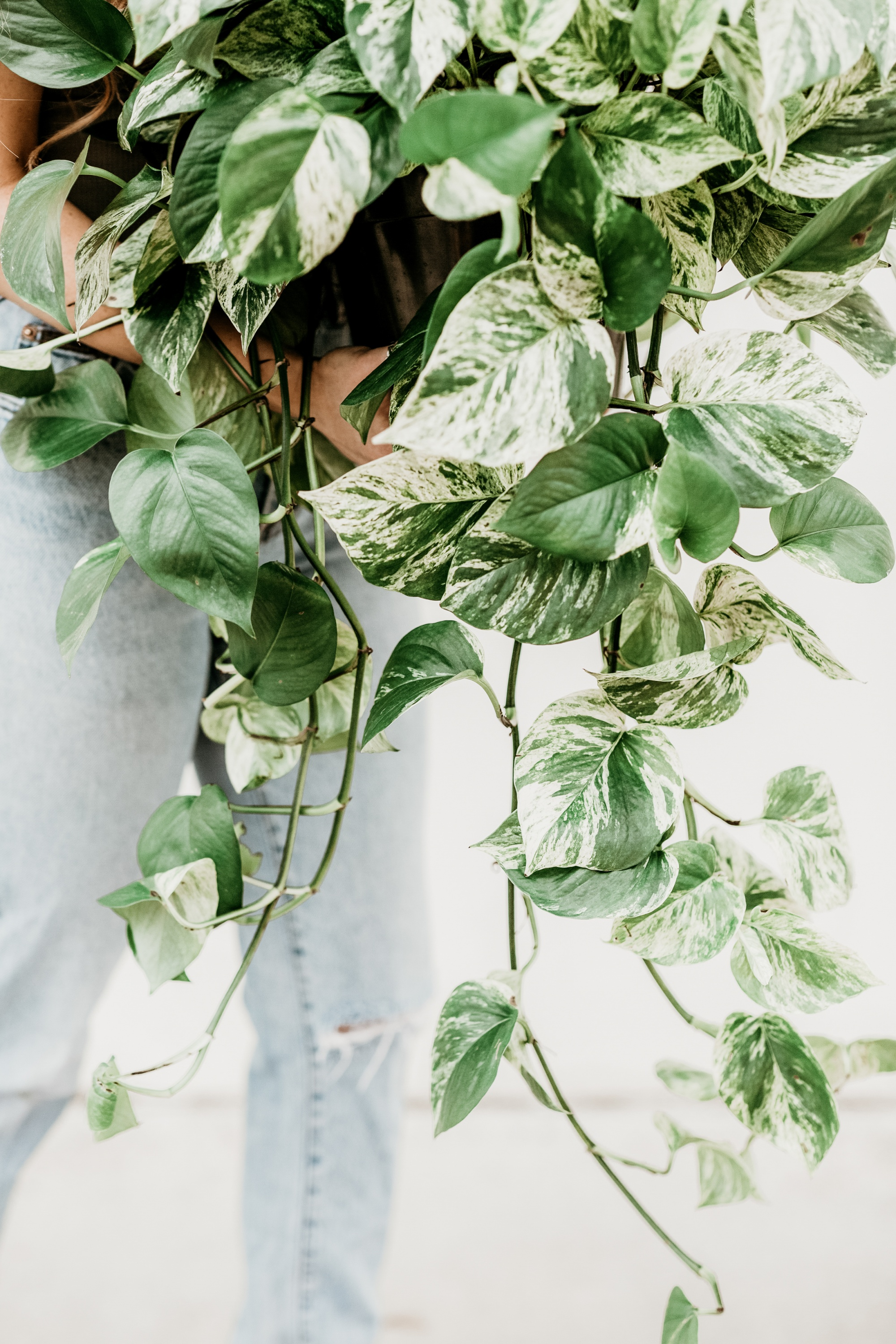 Add A Pop of Spring To Your Home woman carrying leafy green plant, affordable spring home decor